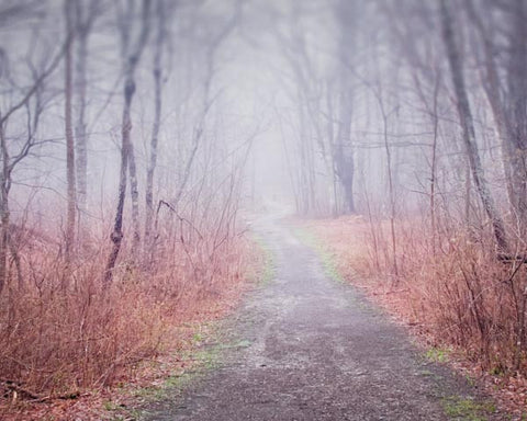 Winding Path Photography Print