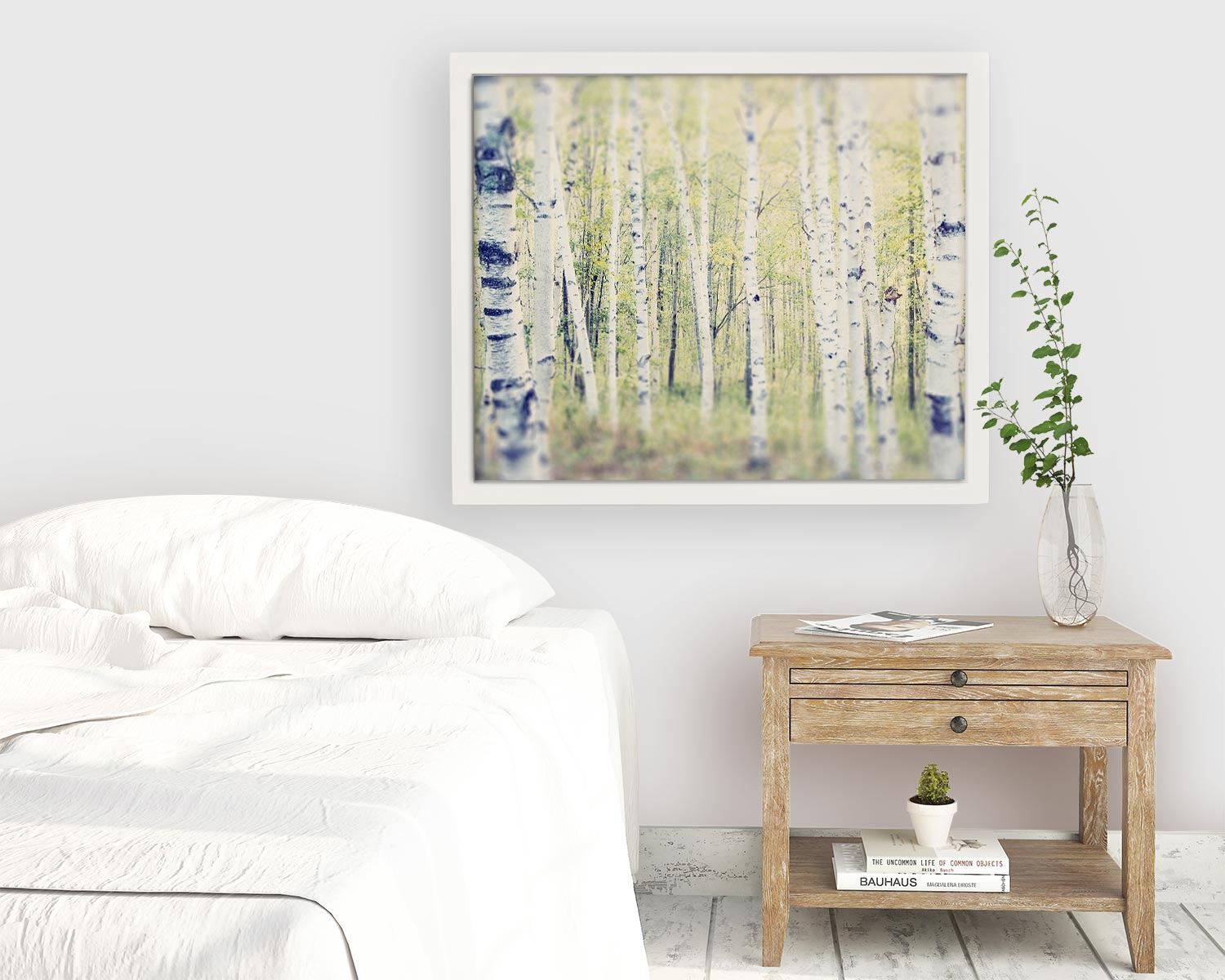 "Maine Landscape Photography Print ""Birch Trees in Spring"""