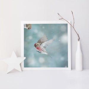 "Fine Art Bird Photography Print ""Redpoll in Snow No. 1"""