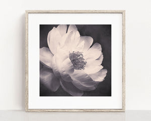 "Black and White Flower Photography Print ""Peony No. 22"""