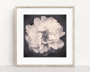 "Black and White Flower Photography Print ""Peony No. 23"""