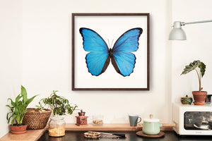 SQ Butterfly No. 17 - Blue Morpho