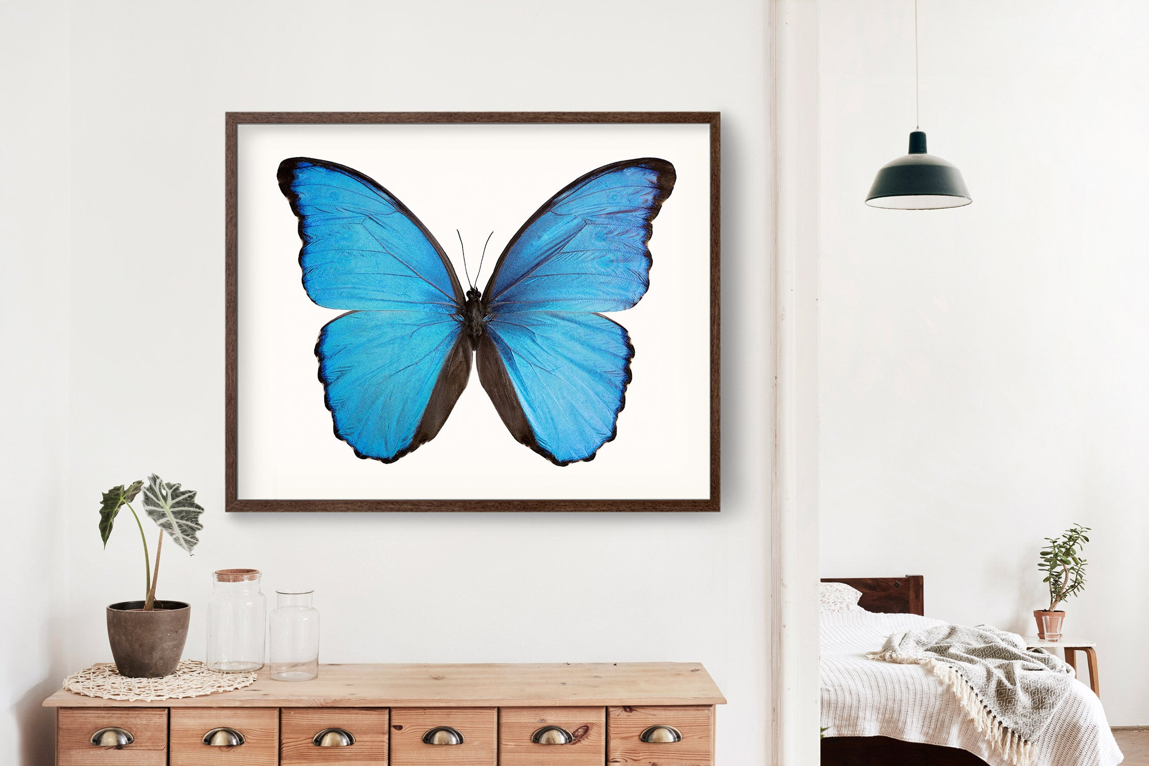 Butterfly Photo No. 17 - Morpho didius - Blue Morpho Butterfly Print