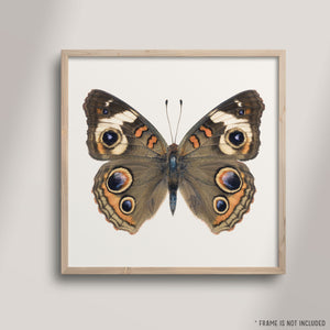 SQ Butterfly No. 5 - Common Buckeye Butterfly