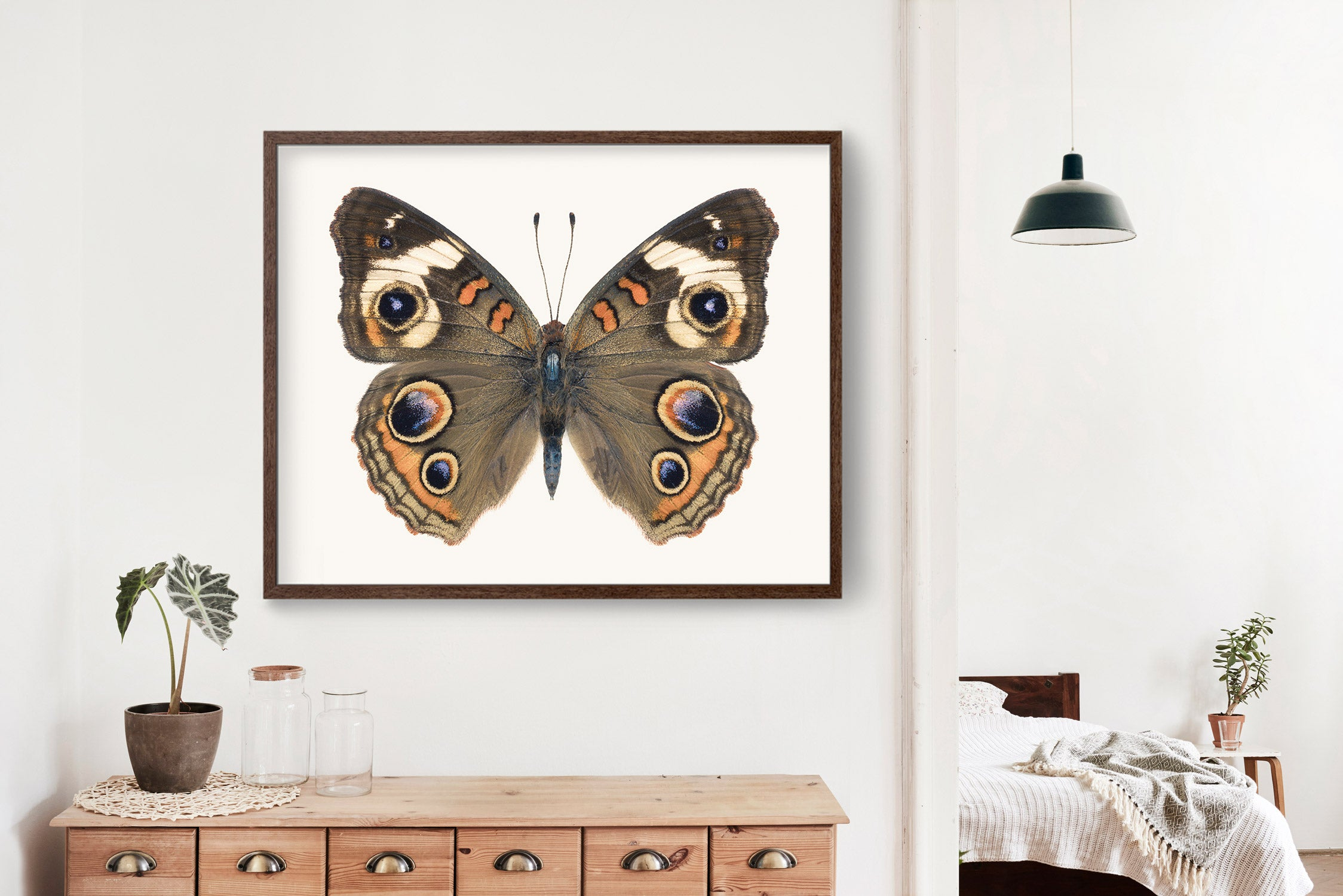 Butterfly No. 5 - the Common Buckeye Butterfly