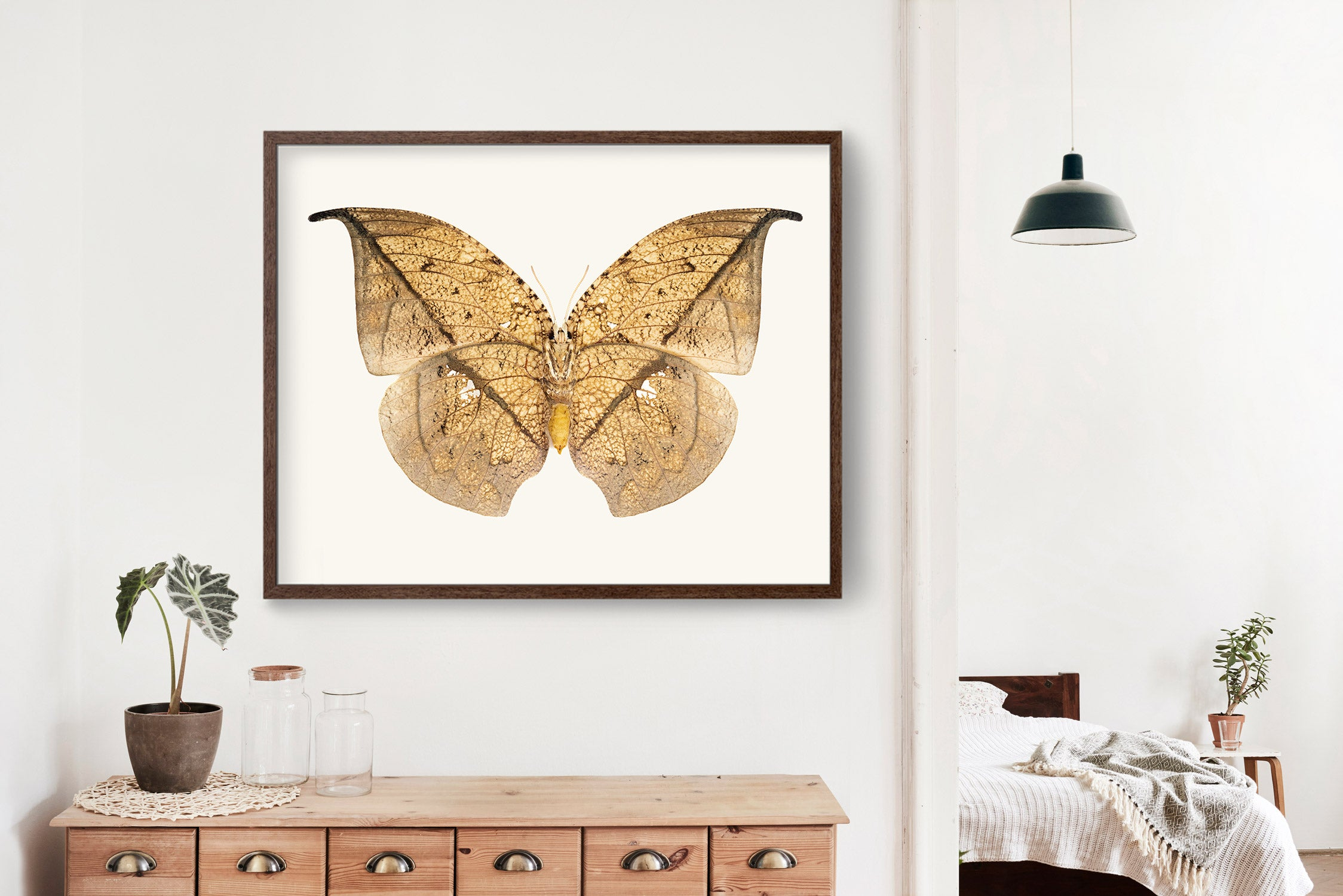 Butterfly No. 11 - the Leafwing Butterfly