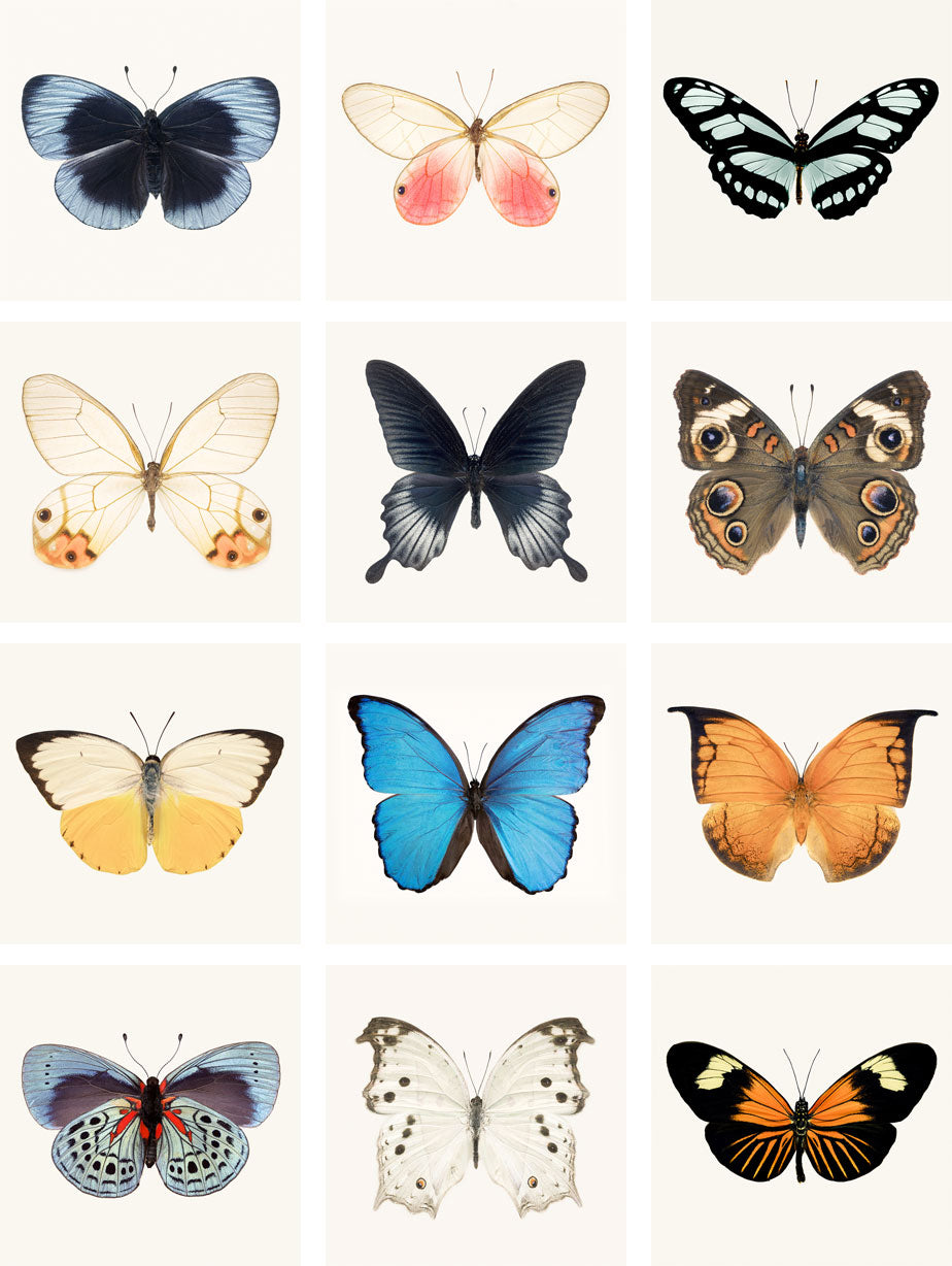"Mini Print Set - Set of 12 5x5 inch Prints ""Butterflies"""