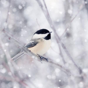 "Set of 4 Prints, Bird Wall Art Set ""Chickadees in Snow"""