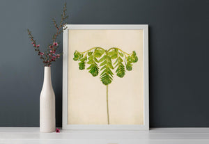 "Fern Art, Botanical Print ""Maidenhair Fern Unfurling"""