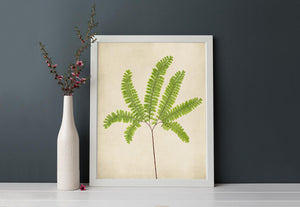 "Fern Art, Botanical Print ""Maidenhair Fern No. 10"""