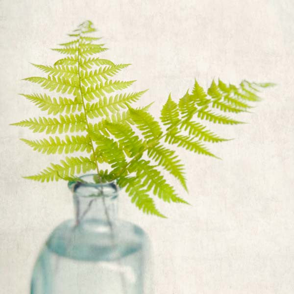 Wild Ferns Photography Print by Allison Trentelman