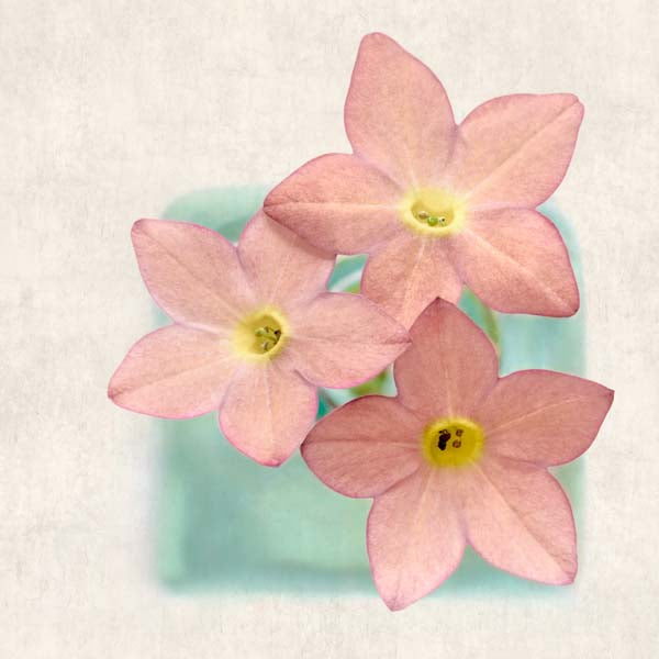 "Set of 4 Prints, Floral Wall Art Set ""Pink Flowers"""