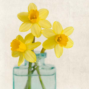 Yellow Daffodils Flower Photography Print by Allison Trentelman