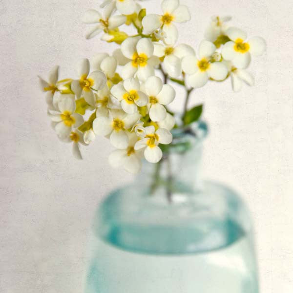Yellow Rock Cress Flower Photography Print by Allison Trentelman