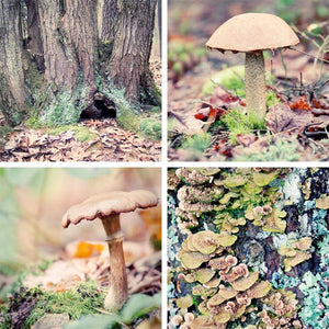 "Set of 4 Prints, Nature Wall Art Set ""Forest Floor Set No. 3"""