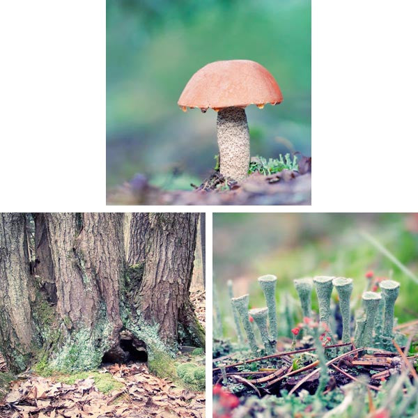 "Set of 3 Prints, Nature Wall Art Set ""Forest Floor Set No. 1"""