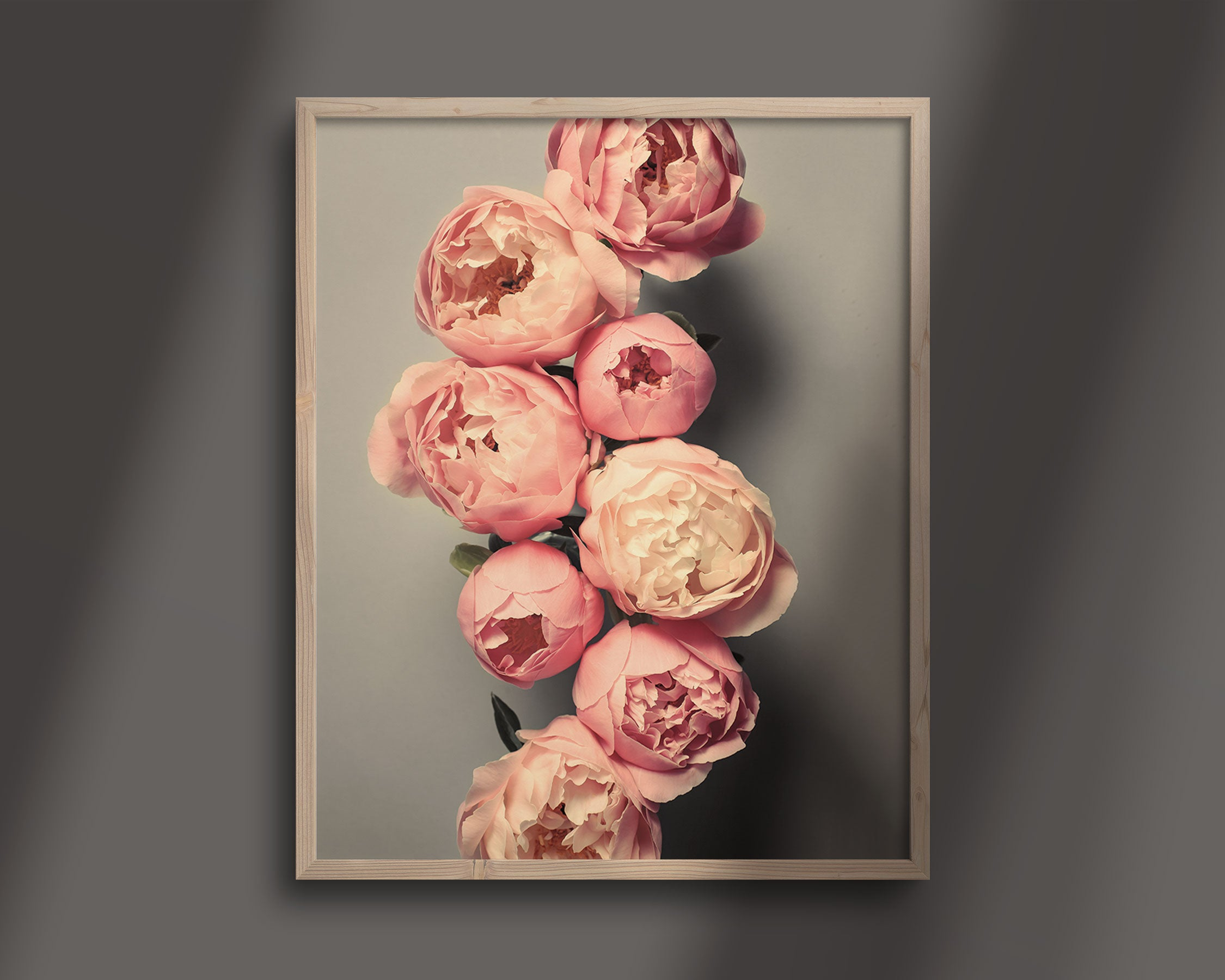 "Fine Art Flower Photography Print ""Coral Peonies No. 50"""