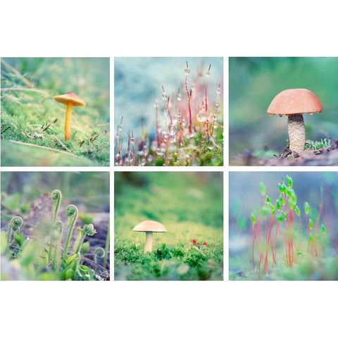 set of 6 nature wall art prints