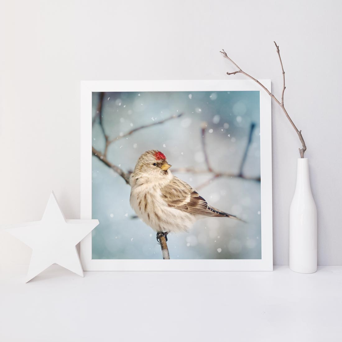 "Fine Art Bird Photography Print ""Redpoll in Snow No. 8"""