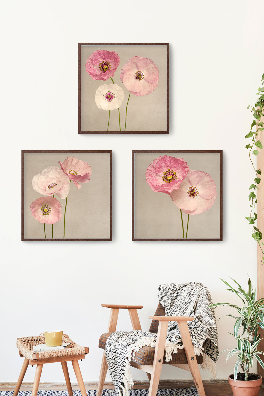 Shirley Poppies - Set of 3