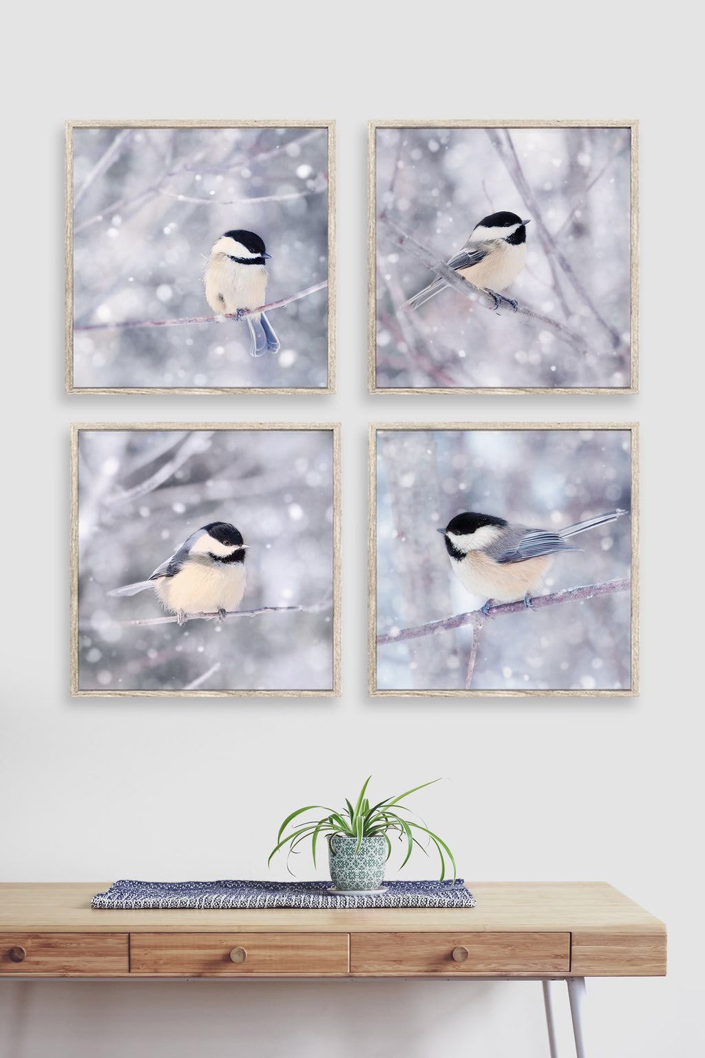 set of 4 chickadee photographs
