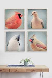 Set of 4 Bird Portrait Prints