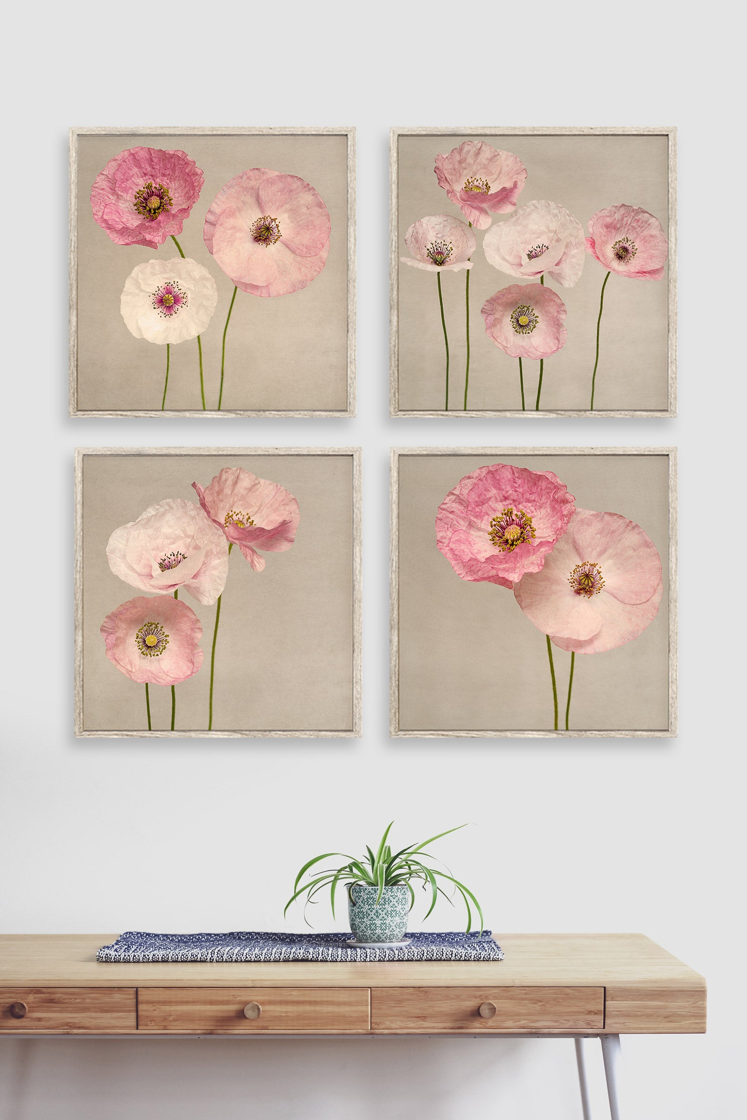 Set of 4 photographs of pink shirley poppies