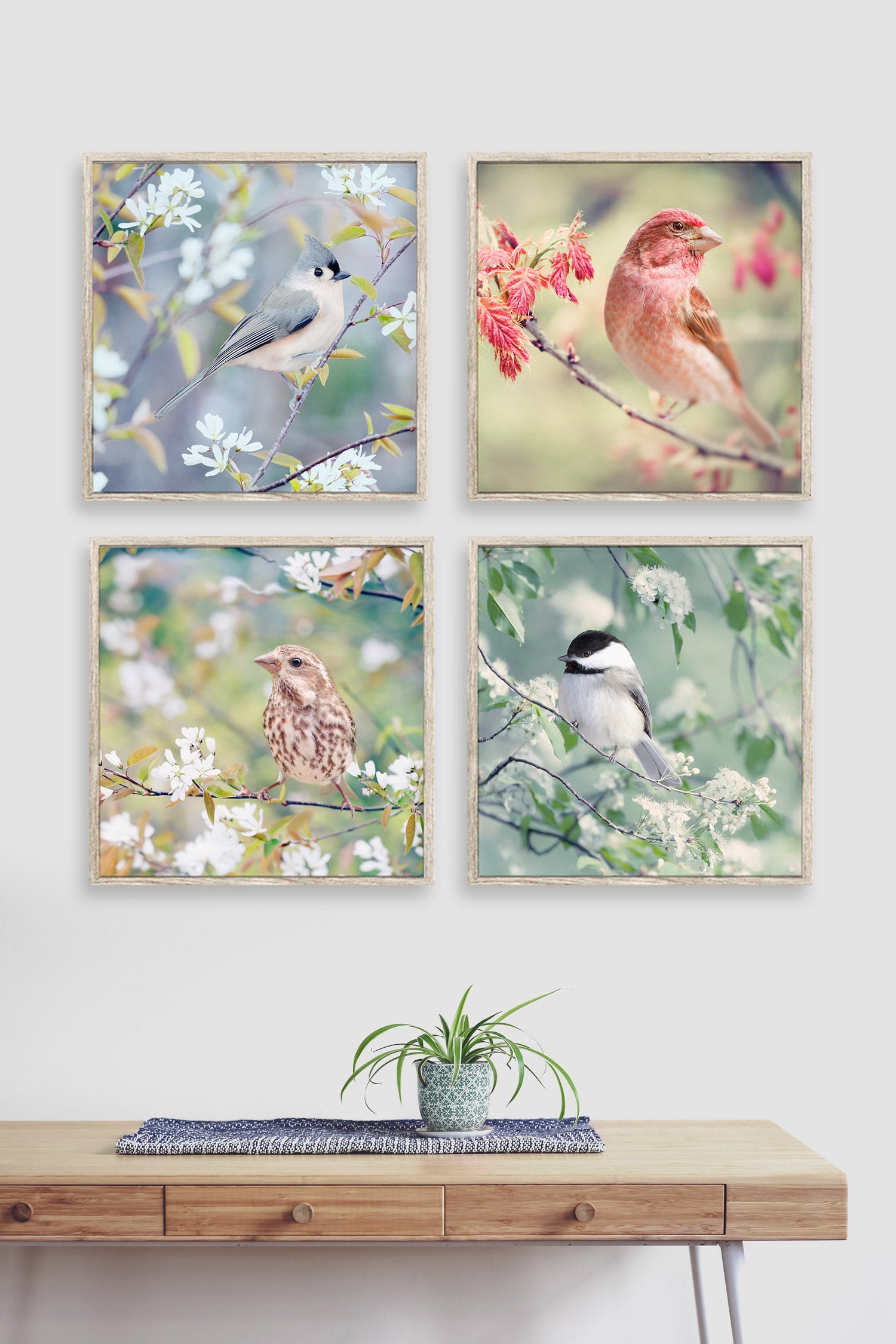 Birds in Spring - Set of 4