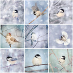 9 Birds in Snow Prints