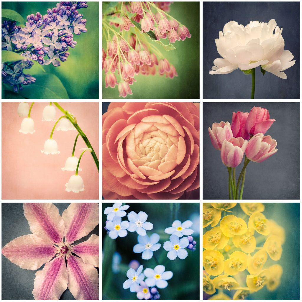 Set of 9 Flower Prints