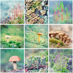 Set of 9 Forest Floor Prints