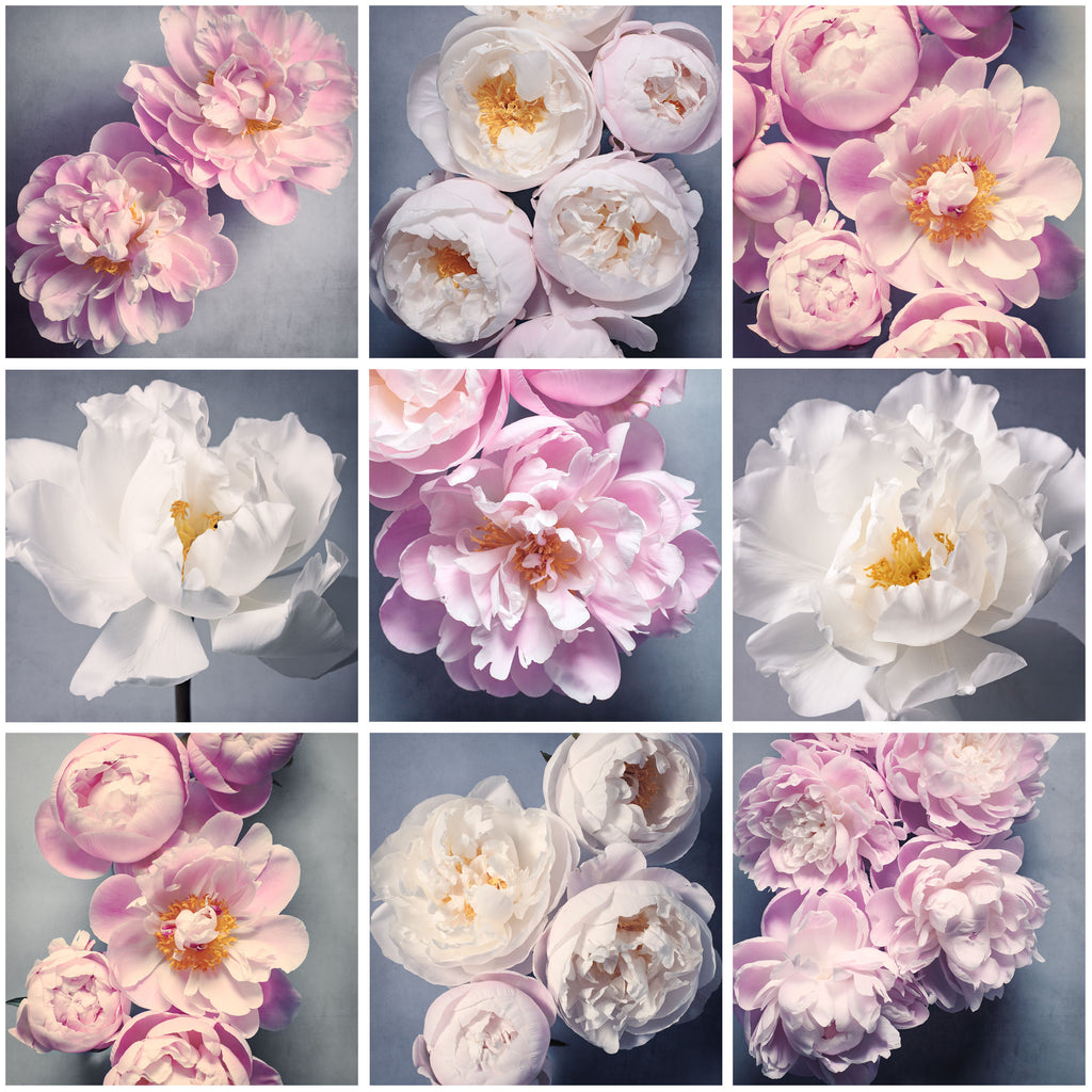 Set of 9 Peony Prints