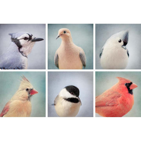 "Set of 6 Prints, Gallery Wall Art Set ""Bird Portraits"""