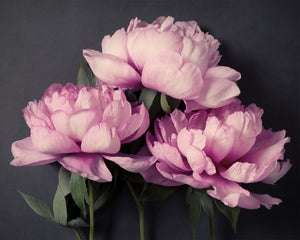 "Fine Art Flower Photography Print ""Peony No. 34"""