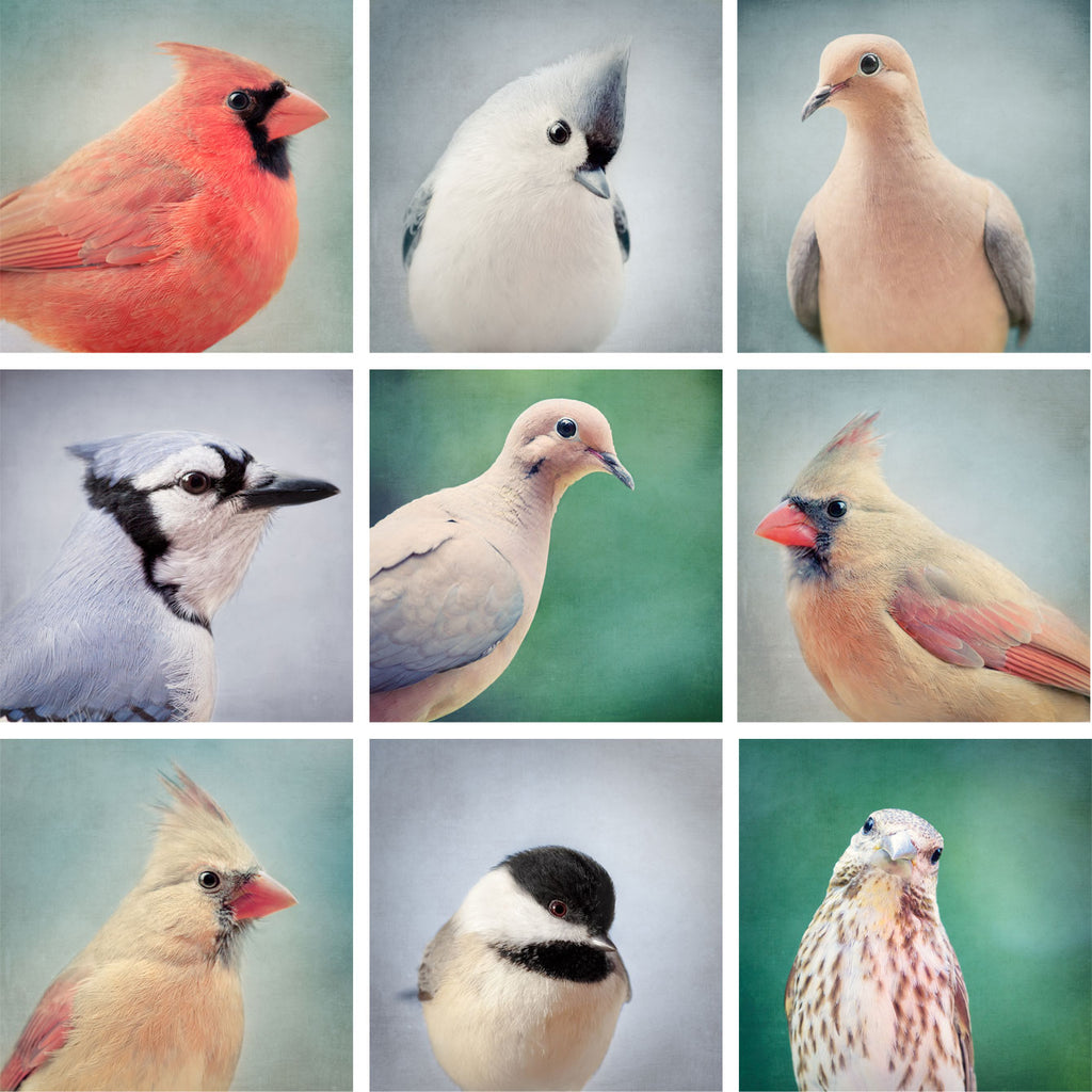 Set of 9 Bird Portrait Prints