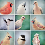 "Affordable Art Print Set - Mini Portfolio ""Wildlife Portraits"""