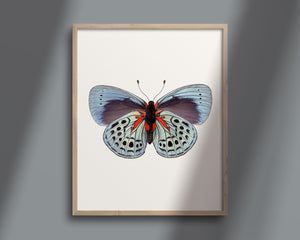 Butterfly No. 12 - the Charles Darwin Butterfly