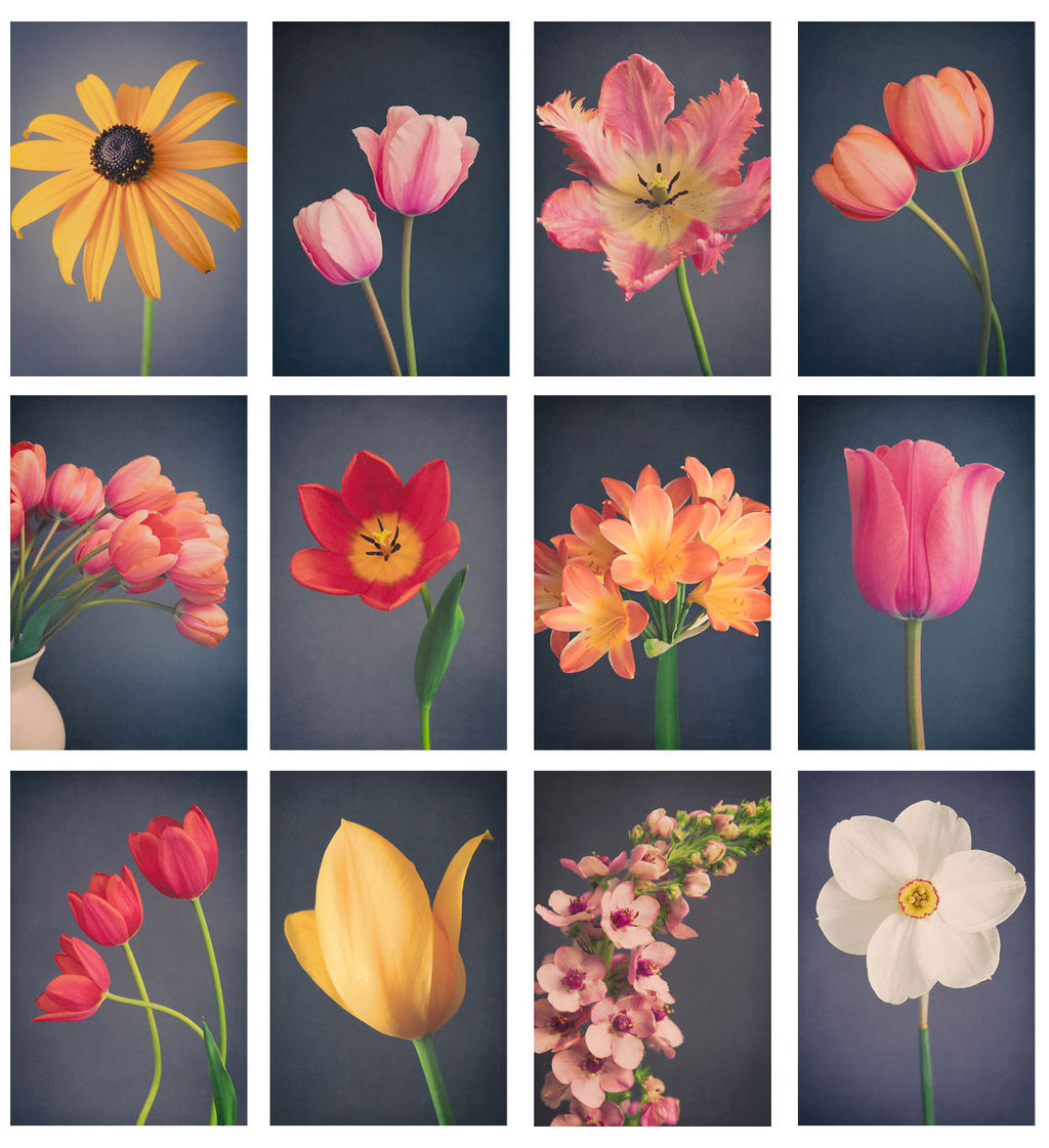 "Mini Print Set - Set of 12 4x6 inch Prints ""Dark Florals"""