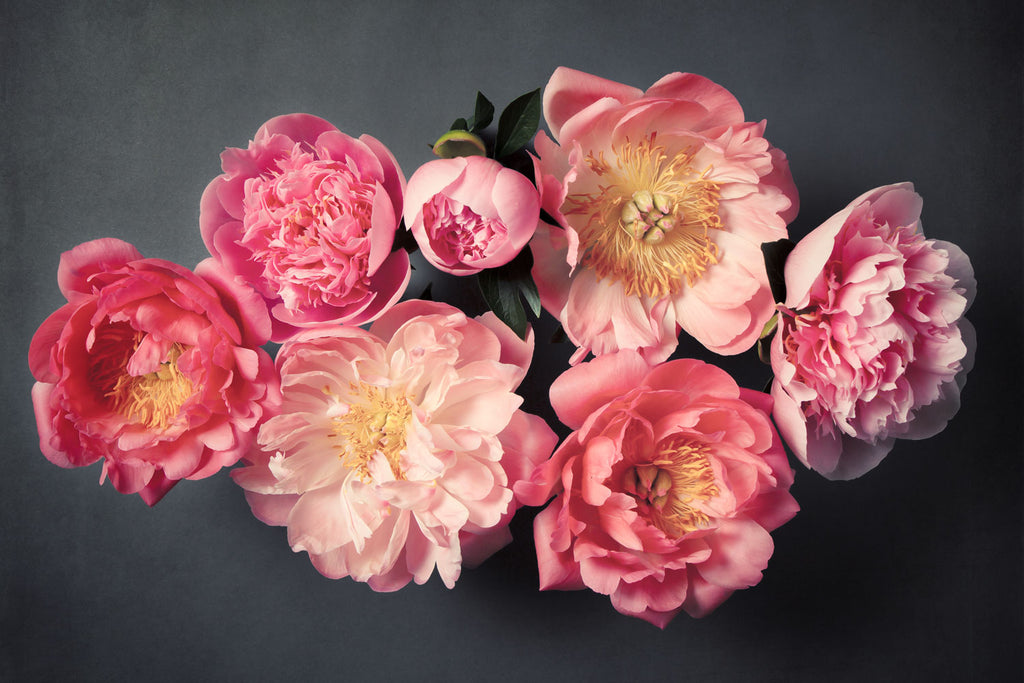 "Fine Art Flower Photography Print ""Coral Peonies No. 35"""