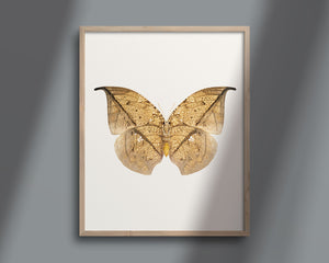 Butterfly Photo No. 11 - Anaea archidona - Leafwing Butterfly Print
