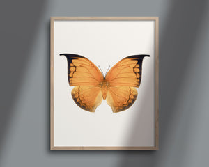 Butterfly Photo No. 8 - Anaea archidona - Leafwing Butterfly Print