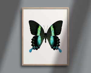 Butterfly No. 16 - the Peacock Butterfly