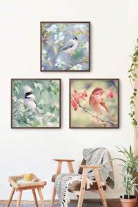 "Set of 3 Prints, Bird Wall Art Set ""Birds in Spring"""