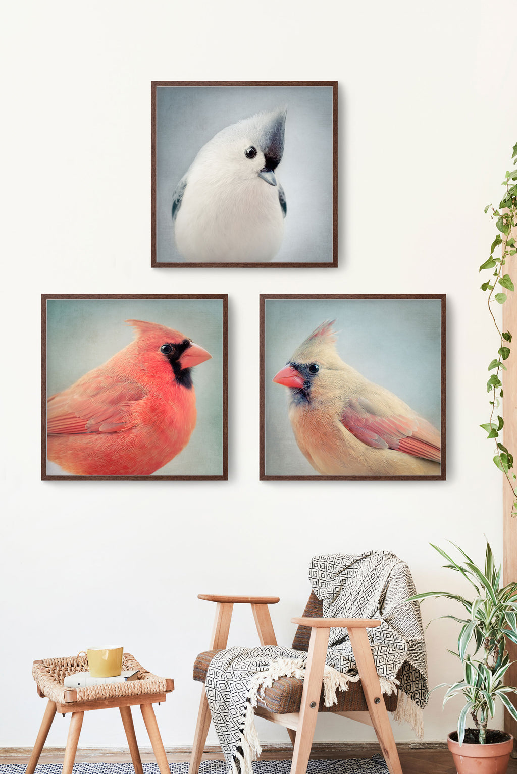 set of 3 photography prints of bird portraits
