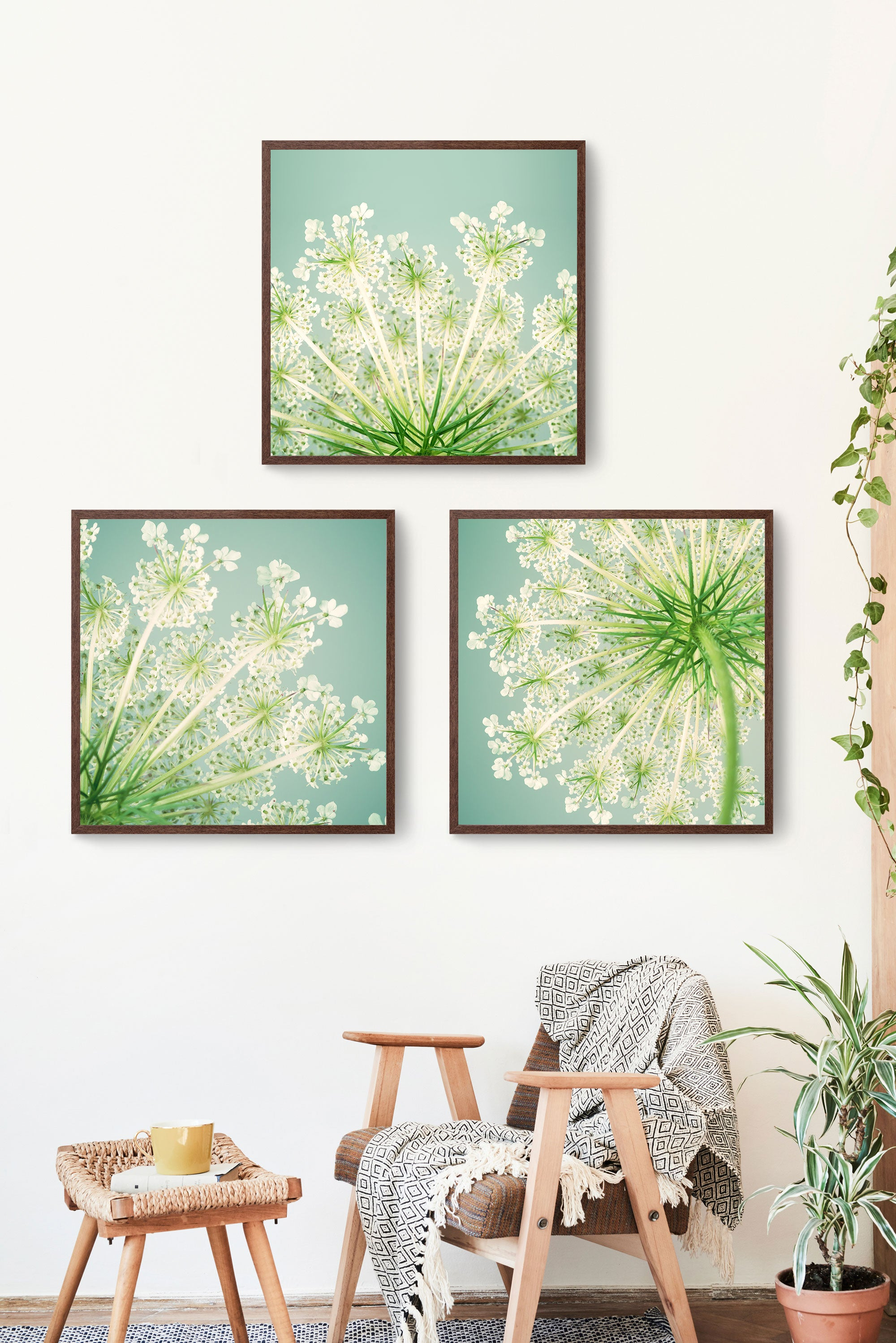 set of 3 prints queen annes lace photos