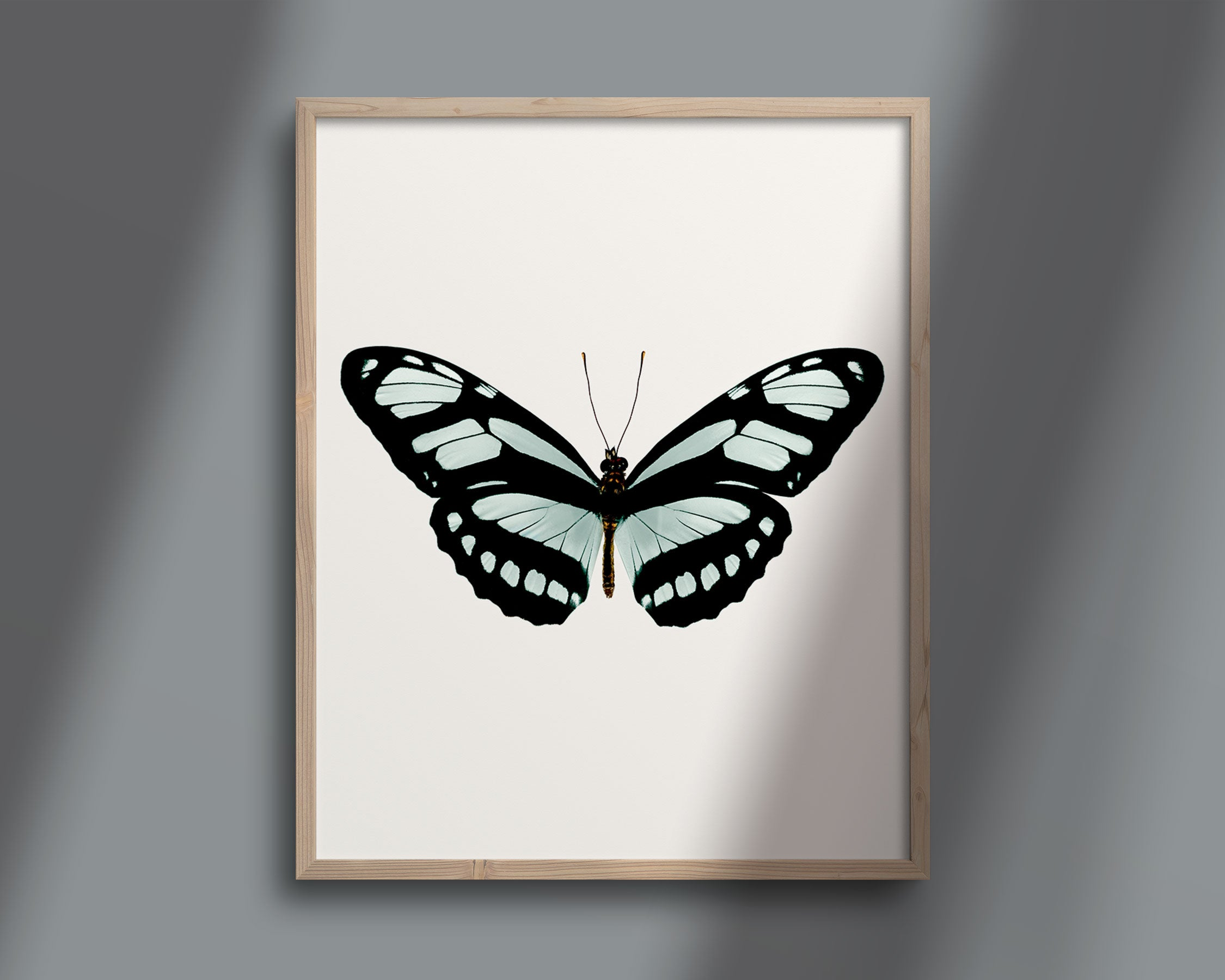 Butterfly Photo No. 15 - Philaertia Dido - Bamboo Page Butterfly Print