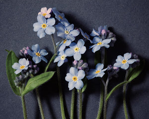Forget Me Not No. 13