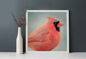"Bird Portrait, Fine Art Bird Photography Print ""Red Cardinal No. 3"""