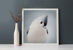 "Bird Portrait, Fine Art Bird Photography Print ""Tufted Titmouse No. 6"""