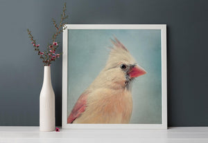 "Bird Portrait, Fine Art Bird Photography Print ""Female Cardinal No. 5"""